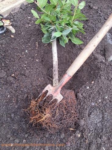 herbs bulb root 2