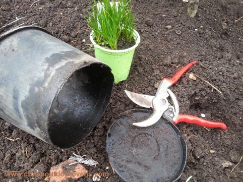 herbs cut pots