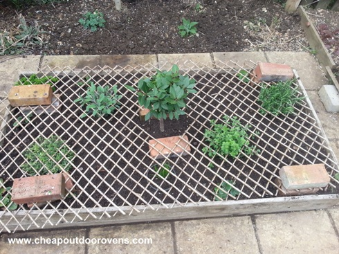 herb garden cat repellent